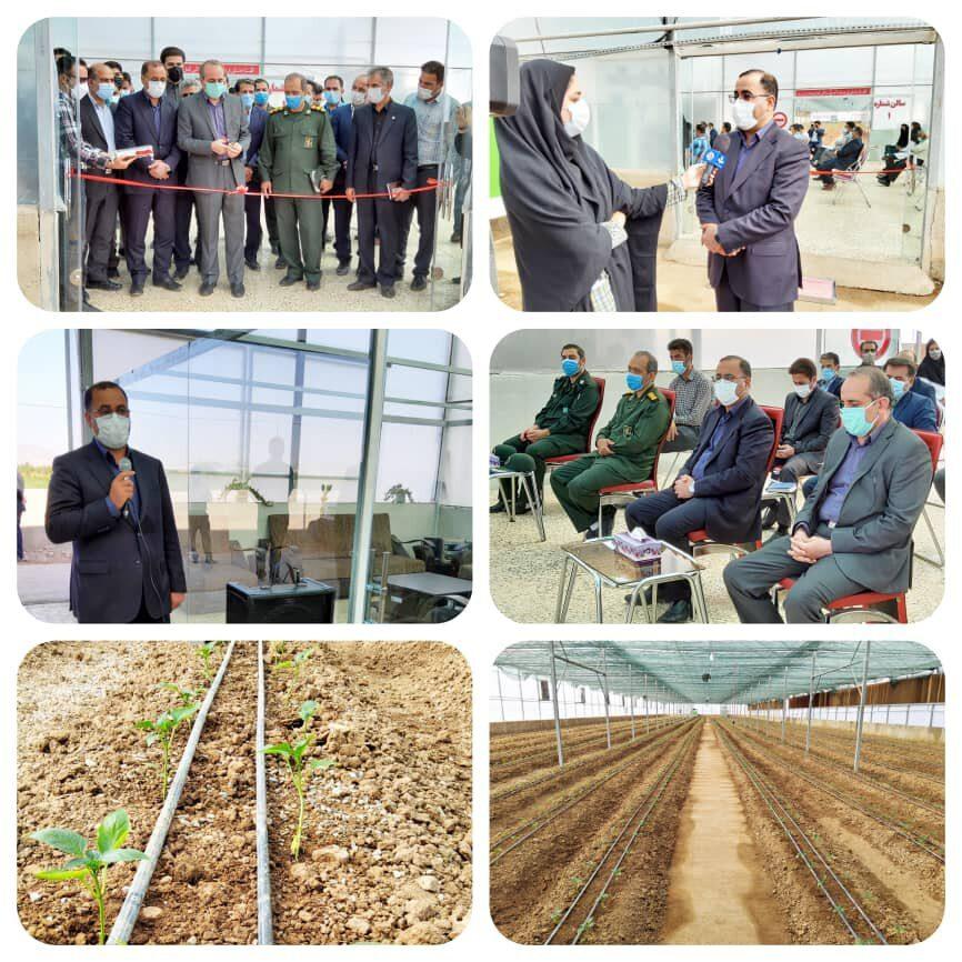 توسعه کشتهای گلخانهای از اولویتها و سیاستهای وزارت جهاد کشاورزی است