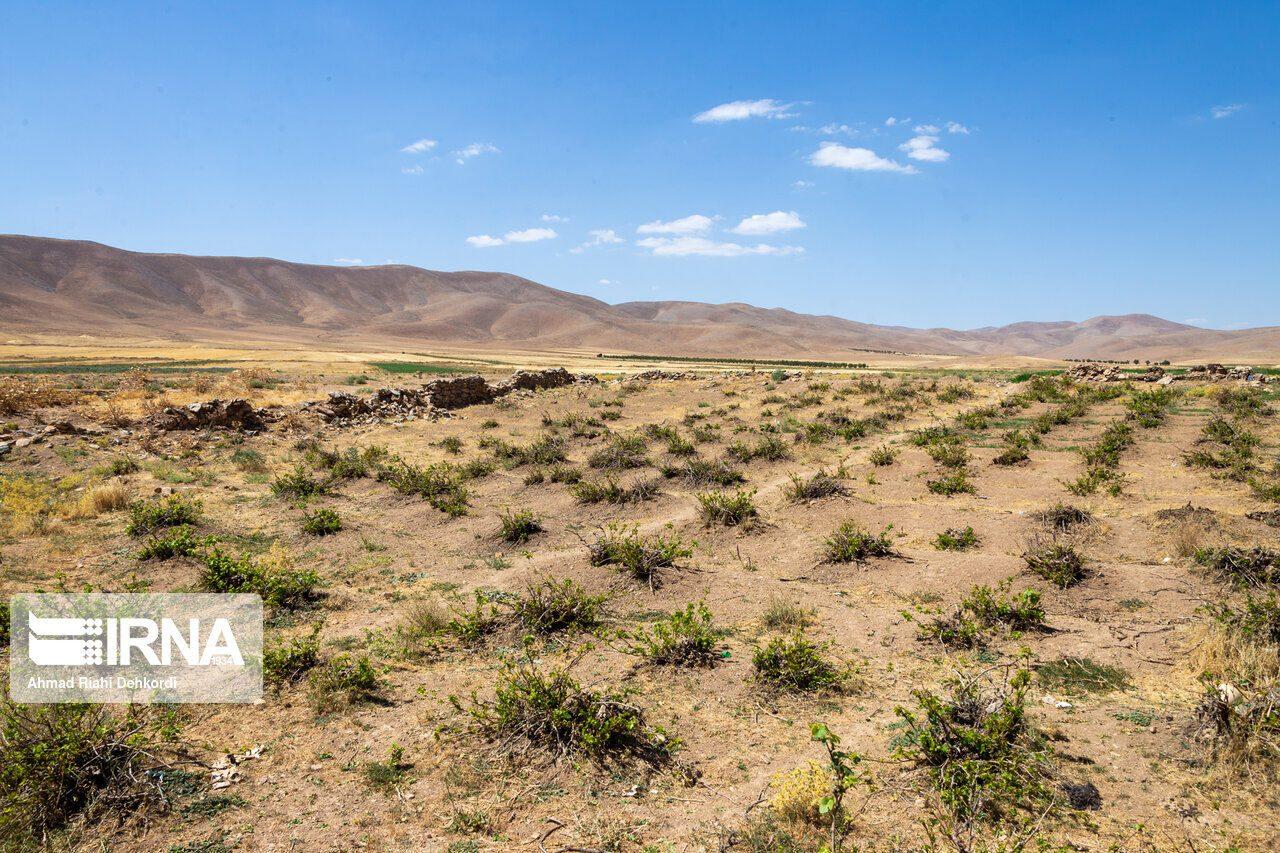 خشکسالی موجب کاهش ۴۰ درصدی تولید گندم در لرستان شد